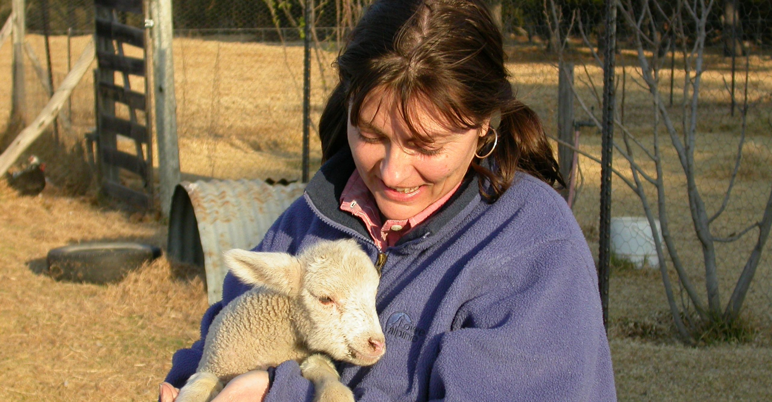 Interact with the farm animals