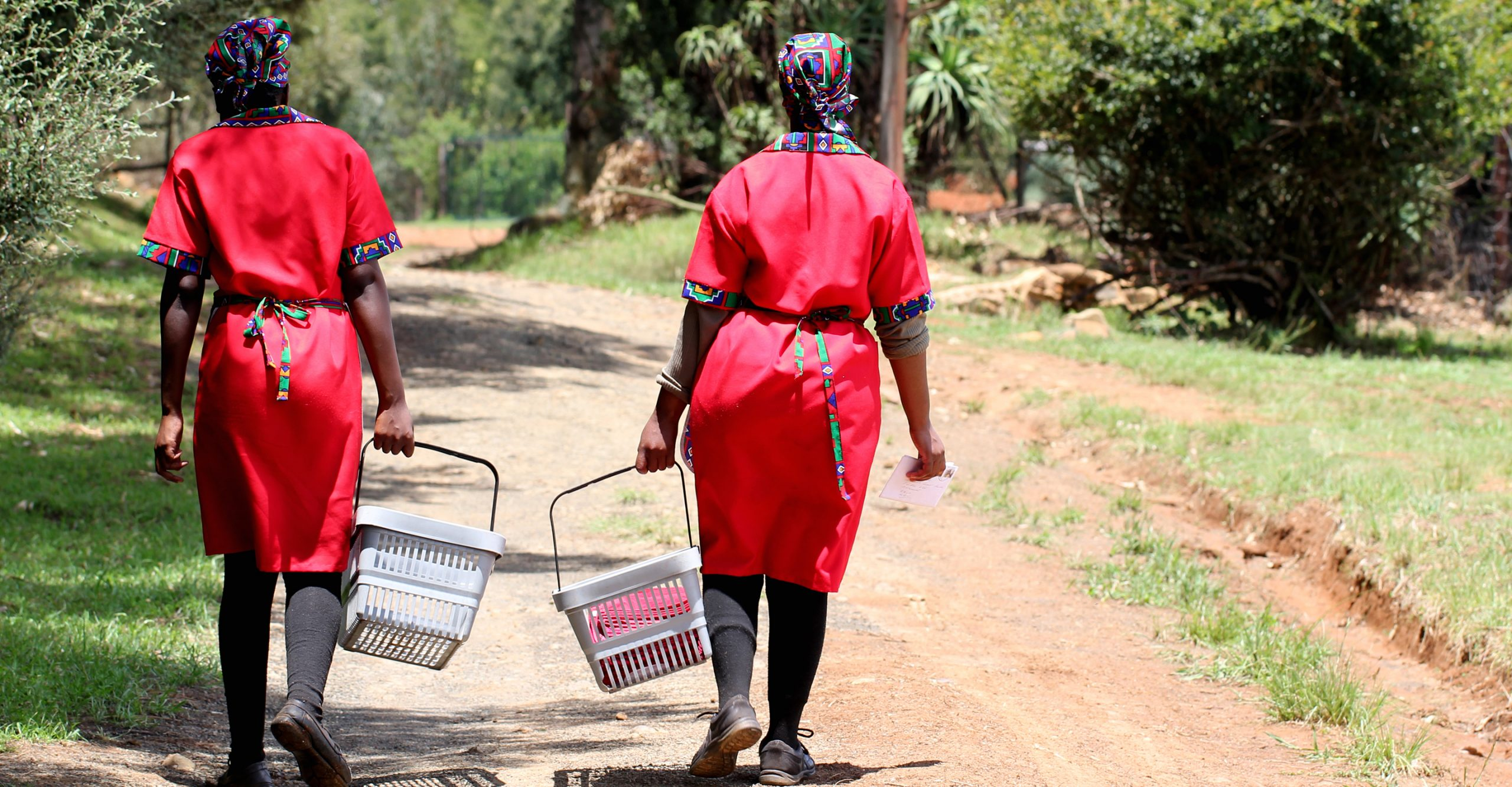 staff fetching produce from the organic garden